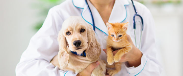 Why Banfield Pet Hospital Has the Best Pet Hospital in Flower Mound