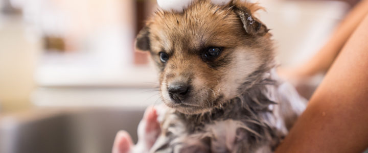 Why Blissful Bark Dog Wash Has the Best Dog Wash in Flower Mound